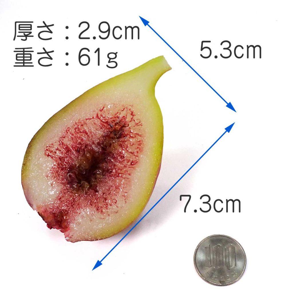大きさ 7.3cm×5.3cm×2.9cm 重さ 61g
